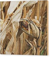 Corn On The Cob Wood Print