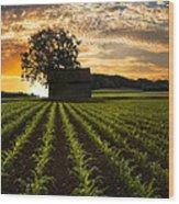 Corn Rows Wood Print
