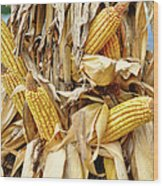 Corn Shock - Sign Of Autumn Wood Print
