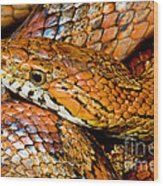 Corn Snake Wood Print