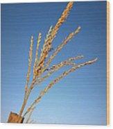 Corn Tassel Wood Print