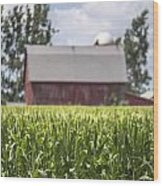 Corn With A Red Barn  Wood Print