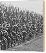 Cornfield Black And White Wood Print