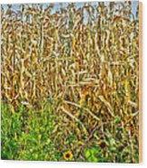 Cornfield Wood Print by Baywest Imaging