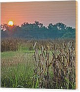 Cornfield Morning Wood Print