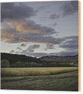 Cornfield Sunset Wood Print