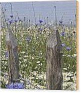 Cornflower Meadow Wood Print
