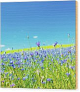 Cornflowers In A Field Wood Print
