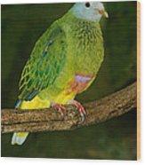 Coronated Fruit Dove Wood Print