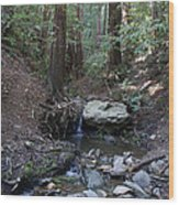 Corte Madera Creek On Mt. Tam In 2008 Wood Print