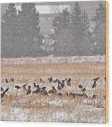 Corvus Field Wood Print