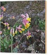 Corydalis In Garden Wood Print