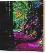 Cosmic Energy Of A Redwood Forest On Mt Tamalpais Wood Print