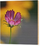 Cosmos And Suzies Wood Print