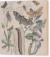 Cossidae - Cochliopodidae - Hepialidae - Psychidae Wood Print