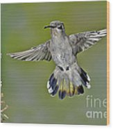 Costas Hummingbird Wood Print