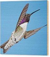 Costa's Hummingbird In Flight Wood Print