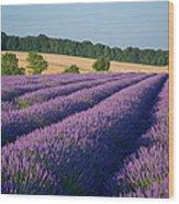 Cotswolds Lavender Wood Print