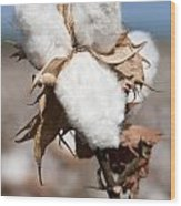 Cotton Bolls  Wood Print