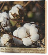 Cotton Bolls Ready For Harvest Wood Print