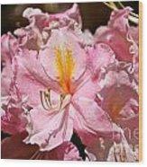 Cotton Candy Azalea Wood Print