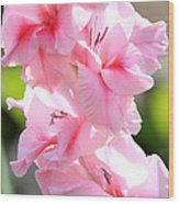 Cotton Candy Gladiolus Wood Print