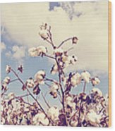 Cotton In The Sky With Filter Wood Print