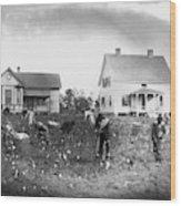 Cotton Picking, 1902 Wood Print