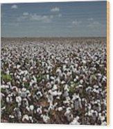 Cotton Plants Wood Print