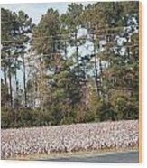 Cotton Season Wood Print