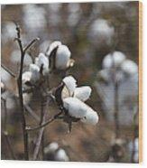 Cotton Southern Gold Wood Print