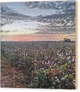 Cotton Sunrise  Wood Print by JC Findley