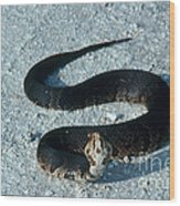 Cottonmouth Threat Display Wood Print
