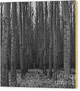 Cottonwood Alley Monochrome Wood Print