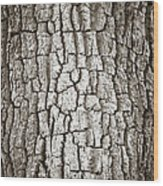 Cottonwood Bark 1 Wood Print