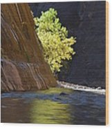 Cottonwood On The Virgin River Wood Print