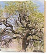 Cottonwood Tree Digital Painting Wood Print