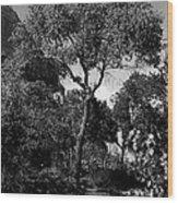 Cottonwood Treem Zion Canyon, Utah. 1929 Wood Print