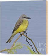 Couchs Kingbird Wood Print