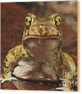 Couchs Spadefoot Toad Wood Print