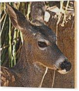 Coues White-tailed Deer - Sonora Desert Museum - Arizona Wood Print