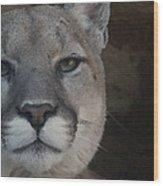 Cougar Digitally Enhanced Wood Print