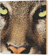 Cougar Eyes Wood Print