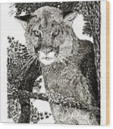 Cougar From Colorado Wood Print