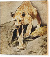 Cougar Hunting Wood Print by Ray Downing