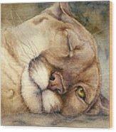 Cougar    I See You     Wood Print