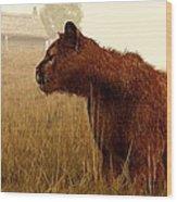 Cougar In A Field Wood Print by Daniel Eskridge