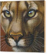 Cougar October 2011 Wood Print