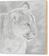 Cougars Gaze Wood Print by Laura Klassen