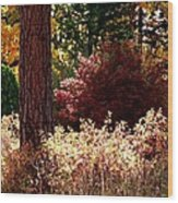 Country Color 28 Wood Print